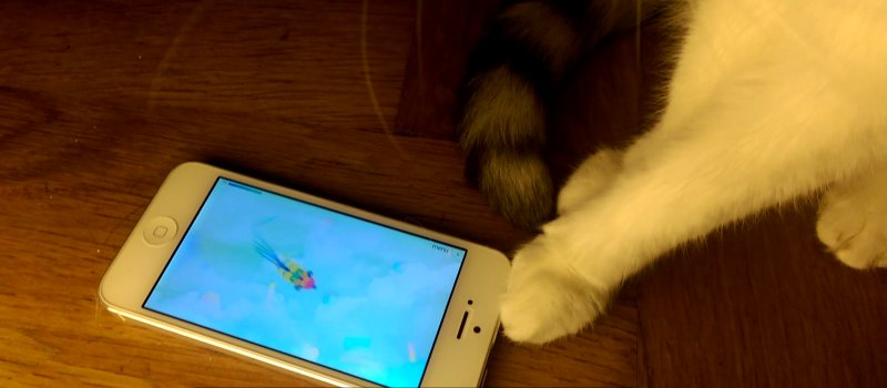 pawme App Single Spiel Modus