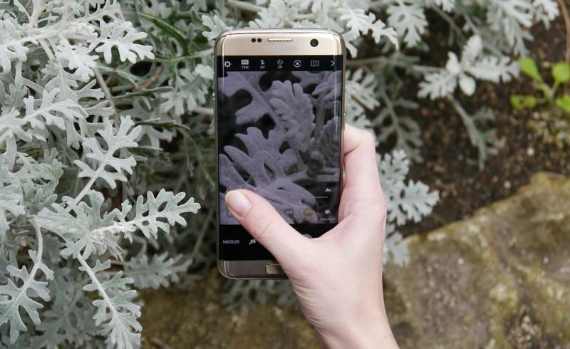 Samsung Galaxy S7 Kamera Test manueller Fokus im Makromodus