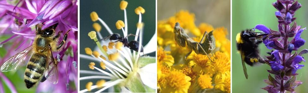 Marcofotografie Blumen Bienen Hummeln von Elisabeth Höfferer