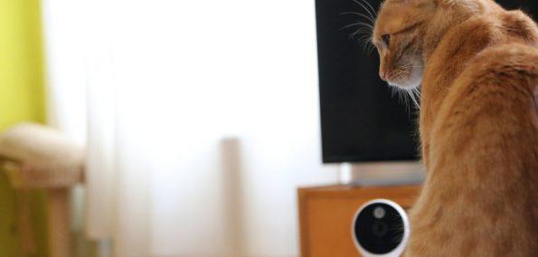 A1 Smart Home Heimüberwachung für Haustiere